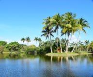 пальмы острова тропические Стоковое Фото