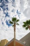 Пальмы под облачными небесами Стоковая Фотография RF
