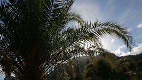 Пальмы против ландшафта moutain видеоматериал