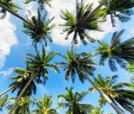 Пальмы против голубого неба стоковое изображение rf