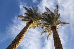 2 пальмы против голубого неба Стоковые Фото