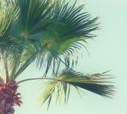 Пальмы против неба тип повелительницы изображения штанги ретро куря перемещение, лето, каникулы и тропическая концепция пляжа Стоковое Изображение RF
