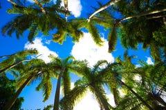 Пальмы против неба стоковая фотография rf