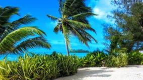 Пальмы рая острова на тропическом пляже острова Стоковое Изображение