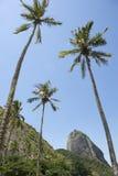 Пальмы Рио Бразилии горы Sugarloaf Стоковые Изображения