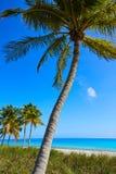 Пальмы США пляжа Key West Флориды Smathers Стоковая Фотография RF