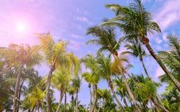 Пальмы с солнечностью стоковое изображение