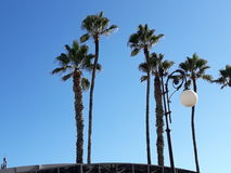 Пальмы с дунули каникулы Ларнаки Кипра предпосылки неба Стоковое фото RF