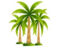 пальмы тропические Стоковое Изображение RF