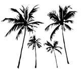 пальмы тропические иллюстрация вектора