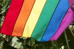 Пальмы флага радуги гей-парада Стоковое фото RF