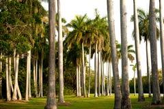 Пальмы Флориды Стоковое Изображение