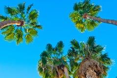 Пальмы Стоковая Фотография RF