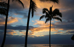 Пальмы silhouette на небе восхода солнца Стоковая Фотография RF