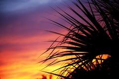 Пальмы silhouetted против захода солнца Стоковые Фотографии RF