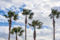 5 пальм Стоковая Фотография