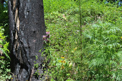 Палят дерево от лесного пожара стоковые фотографии rf