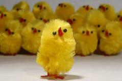 певец-соло хора цыпленока Стоковая Фотография RF