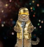 Певица 2 кота стоковые фотографии rf