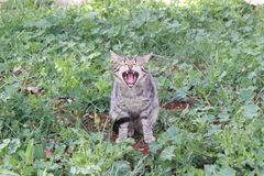 Певица кота Стоковое фото RF
