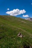 Пейзаж ландшафта горы с голубым небом над timberline Стоковое Фото