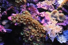 Пейзаж бархата подводный Стоковое Изображение