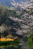 Пейзаж весны в парке Hangzhu Стоковое Изображение RF