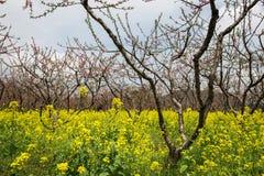 Пейзаж весны Стоковая Фотография RF