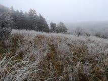 Пейзаж вполне льда стоковые фото
