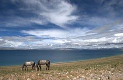 Пейзаж в Nam Co Стоковое Изображение RF