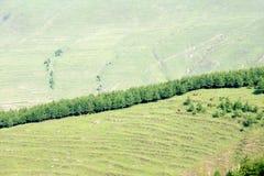 Пейзаж горы лета Стоковое Изображение