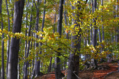 пейзаж горы листва осени красивейший Стоковая Фотография RF