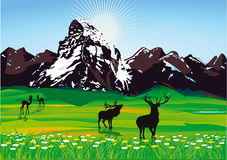 пейзаж горы одичалый Стоковое Изображение