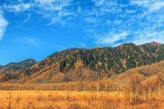 Пейзаж горы с лесом в сезоне осени, Nikko сосны, Стоковые Изображения RF