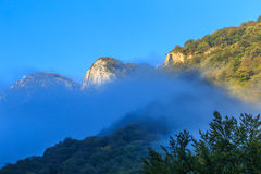 Пейзаж горы с черными соснами Стоковая Фотография