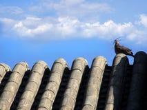 Пейзаж голубя Стоковое Изображение