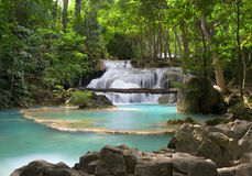 пейзаж джунглей Стоковые Фотографии RF