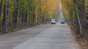 Пейзаж дороги в осени сток-видео