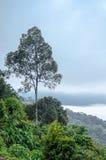 Пейзаж деревьев на горе влияние нерезкости предпосылки 50mm горит сторону партии nikkor ночи Стоковое фото RF