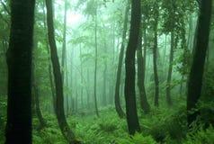 пейзаж зеленого цвета пущи Стоковое фото RF