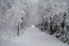 пейзаж зимний Стоковое Изображение RF
