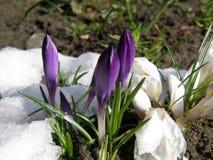 Пейзаж зимы в Польше захватывающ Стоковое Изображение