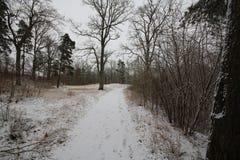 Пейзаж зимы в Nybro Швеции стоковое фото rf