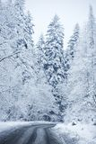 Пейзаж зимы - дорога пущи Стоковая Фотография