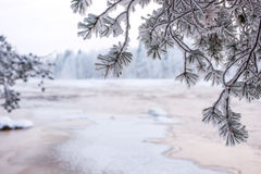 Пейзаж зимы от финской природы Стоковые Фото