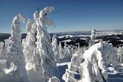 Пейзаж зимы рождества Стоковая Фотография RF