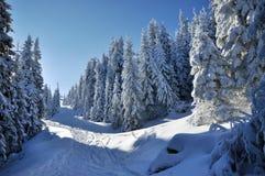 Пейзаж зимы рождества Стоковое фото RF