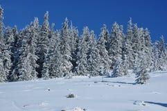 Пейзаж зимы рождества Стоковые Фотографии RF