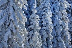 Пейзаж зимы рождества Стоковые Изображения