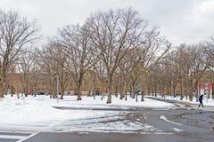 Пейзаж зимы университета Хоккаидо Стоковое Изображение RF